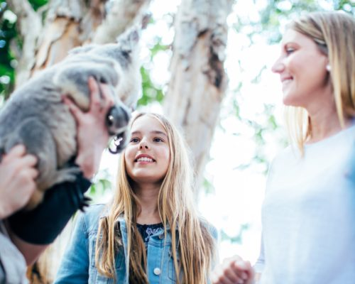 koala-with-handler-and-children-at-dreamworld-corroboree-(1)